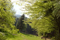 greenland Arkivfoto