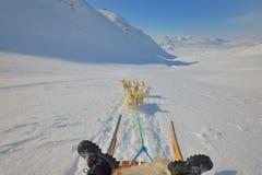 Greenland dogs Stock Photos