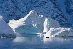Greenland - Iceberg - Northwest Fjord. Icebergs in Northwest Fjord in the far reaches of Scoresbysund in eastern Greenland Royalty Free Stock Image