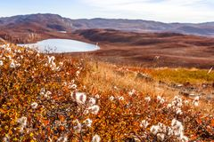 Greenlandic πορτοκαλί tundra φθινοπώρου τοπίο με τις λίμνες και το mounta στοκ εικόνες με δικαίωμα ελεύθερης χρήσης