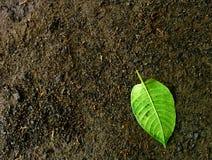 Greenleaf Image libre de droits
