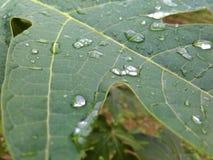 Greenleaf. Raindrop waterreflection nature natural Royalty Free Stock Photo