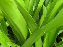 greenleaves arkivbild