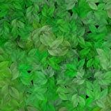 greenleaves vektor illustrationer