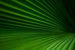 greenleaves gömma i handflatan Fotografering för Bildbyråer