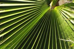 greenleaves gömma i handflatan arkivfoton
