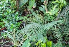 greenleaves gömma i handflatan Naturlig bakgrund för tropisk växt fotografering för bildbyråer