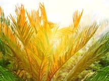 greenleaves gömma i handflatan Naturlig bakgrund för tropisk växt arkivfoton