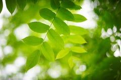 Greenleaves med Arkivfoto