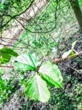 greenleves Стоковое Изображение