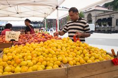 Greenmarket Farmers Market Union Square NYC Royalty Free Stock Images