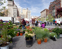 Greenmarket NYC Stock Image