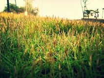 Greenness. Fodder grass greengrocers natural Royalty Free Stock Photo
