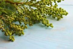 Greenplant με τη στρογγυλή επάνθιση Στοκ εικόνα με δικαίωμα ελεύθερης χρήσης