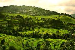 Greenry i berg Arkivbilder
