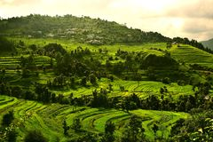 Greenry in montagne Immagini Stock