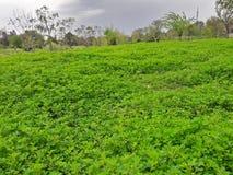 Greenry am Park Lizenzfreies Stockfoto