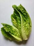 greens органическо Салат стоковая фотография
