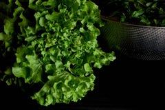 greens Простая и здоровая еда от сада organics стоковые изображения rf