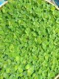 greens стоковые изображения