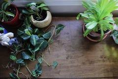 greens Royalty-vrije Stock Fotografie
