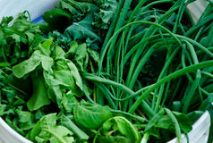 Greens in a bucket Stock Images