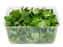 Greens in the container. Stock Photos