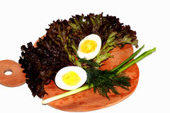 Greens. Greens for cooking salad. These lettuce are very useful for human health. They saturate the thyroid gland with necessary microelements. Egg and green Stock Photography