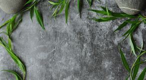Greens frame on a gray background. Branches of willow and green leaves. Gray gloomy cement floor. Greens frame on a gray background. Branches of willow and stock images