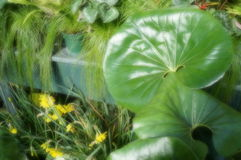 Greens in garden. Big leaves plants with long grasses in indoor glasshouse Royalty Free Stock Photography