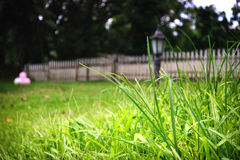 Greens. Grass macro shot using Nikon D3100 18-55mm kit lens Stock Image
