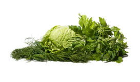 Greens isolated on white. Cabbage, parsley and fennel isolated on white stock photos