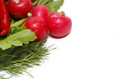 Greens isolated on white. Radish, pepper, parsley and fennel isolated on white stock image