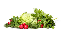 Greens isolated on white. Cabbage, parsley, radish and fennel isolated on white stock images