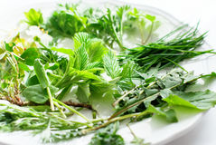Greens for natural decoration of Easter eggs Royalty Free Stock Photo