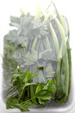 Greens in packing Stock Photography
