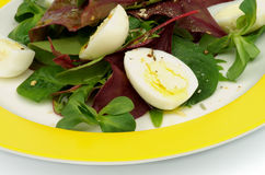Greens Salad Royalty Free Stock Photo