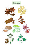 Greens and spices set hand drawn illustrations. Isolated on white royalty free illustration