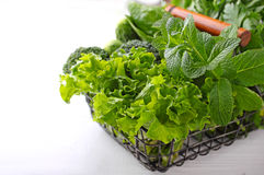 Greens: spinach, cucumber, broccoli, garlic, mint, parsley, lettuce, onions in a metal basket Royalty Free Stock Image