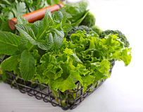Greens: spinach, cucumber, broccoli, garlic, mint, parsley, lettuce, onions in a metal basket Stock Photography