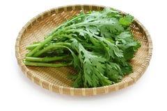 Greens van de chrysant stock afbeelding