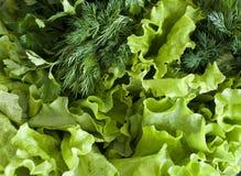 Greens van de tuin Stock Afbeeldingen