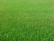 Greens van het golf Stock Foto