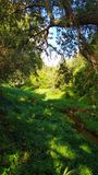 Greenspace in an urban place. Oaks,ditch, greenery. Florida stock photo