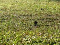 Greensward στο εθνικό πάρκο Phu Kradueng Στοκ εικόνες με δικαίωμα ελεύθερης χρήσης