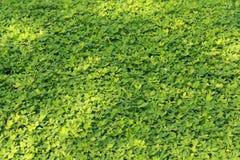 Greensward Zdjęcie Royalty Free