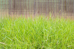 greensward Lizenzfreies Stockbild