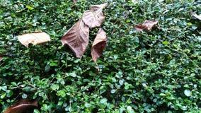 greensward Foto de archivo