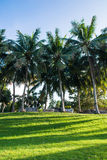 Greensward and coconut trees in the garden Royalty Free Stock Photography