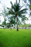 Greensward and coconut trees Stock Images